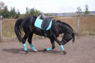 Bow horse №2535