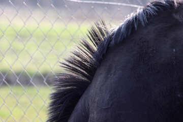 coat and mane of horse  №2544