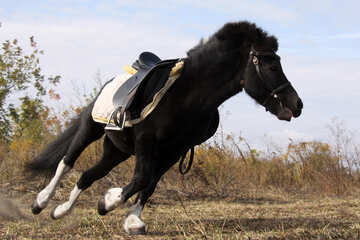 Su un cavallo al galoppo №2126
