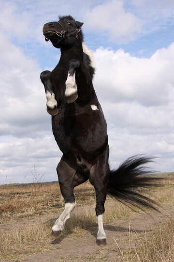 Pony dancing  №2133