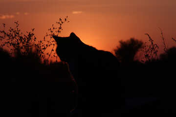 Cat sunset  №2874