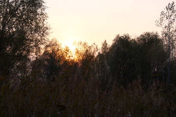 Sunset over the reeds  №2694