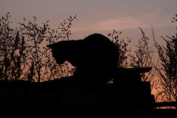 A silhouette of cat at dusk  №2871
