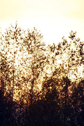 Siluette degli alberi №2700