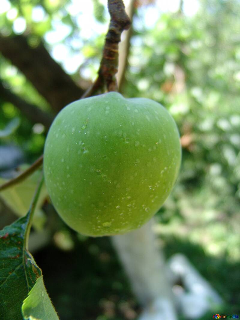 Green  apple №2412