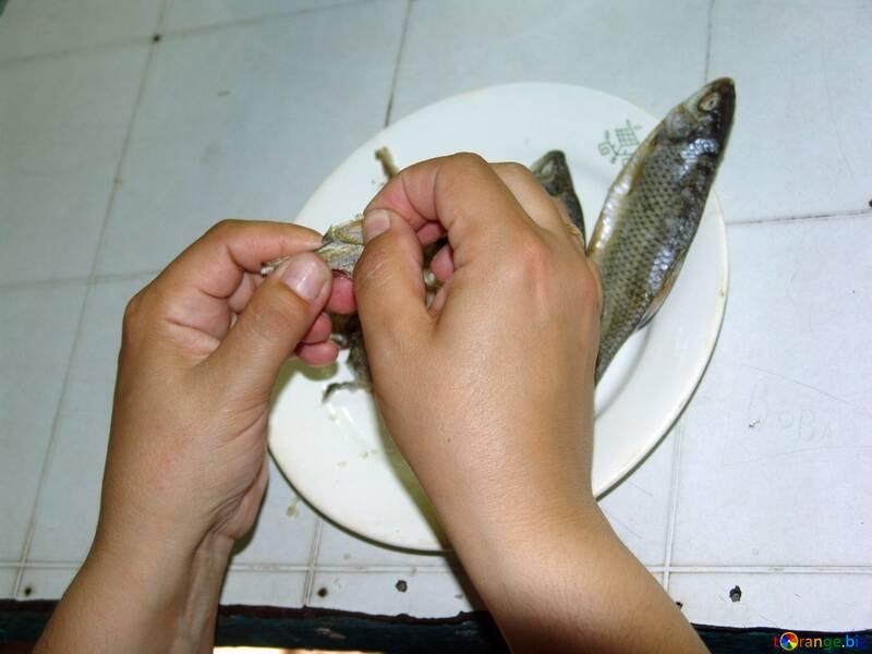 Comer peixes №2457