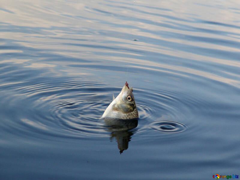 Fish on hook №2008