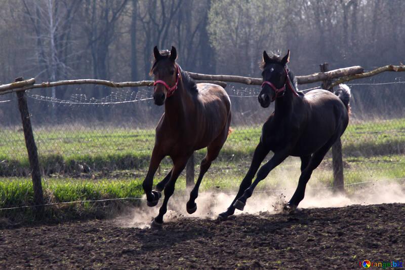 Games foals  №2547