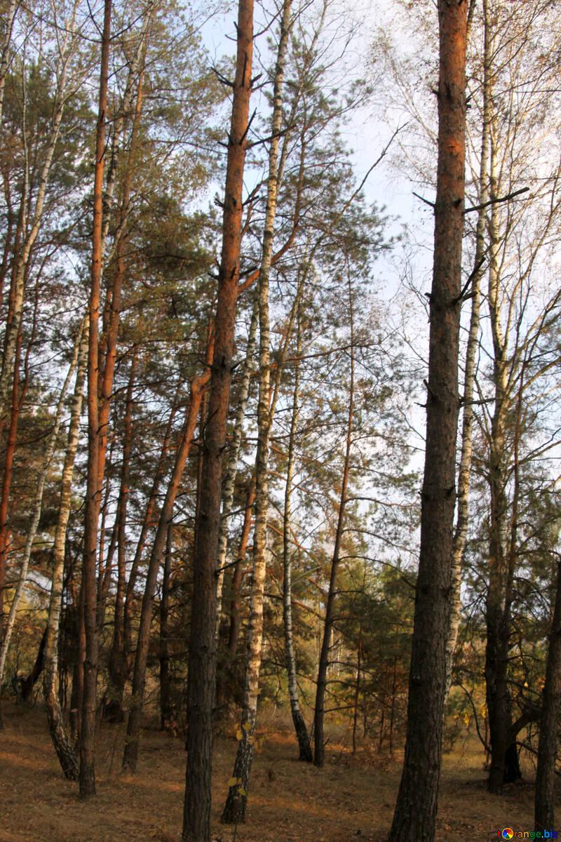 Se situent dans la forêt №2155