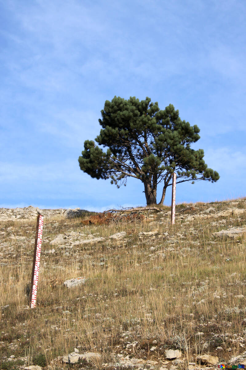 Pine and geodesic sign on the hillside №2287