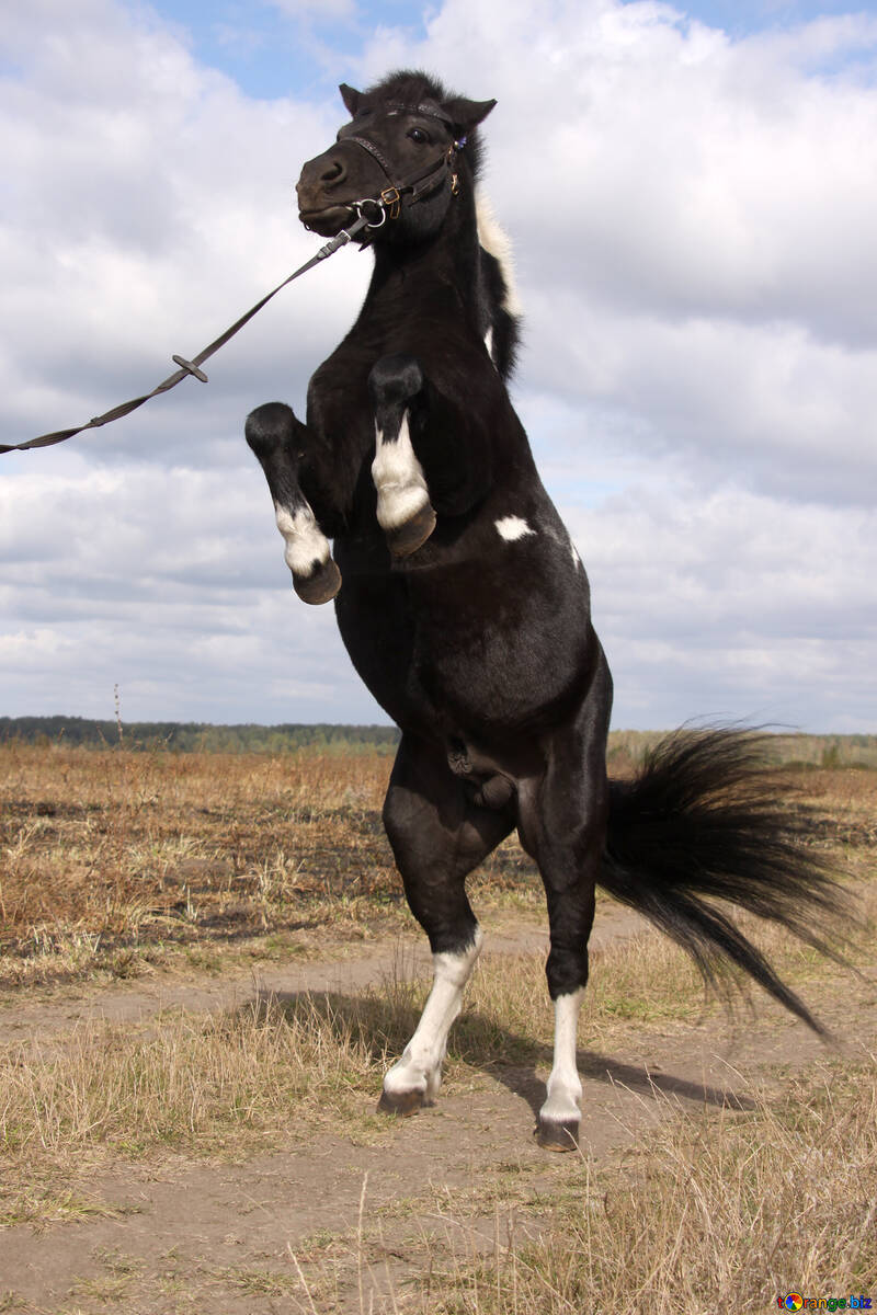 Pony on stands on its hind legs №2131
