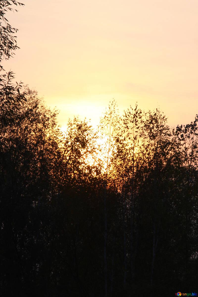 El bosque. El ocaso. №2698