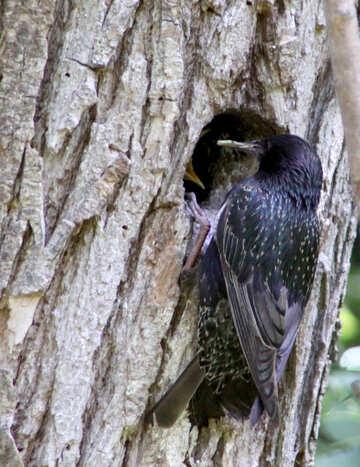 Bird №20321