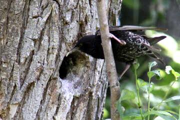 Bird food brought to nestlings №20322