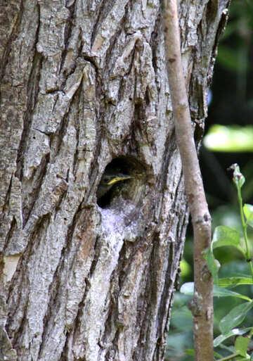 Nestling in hollow №20316
