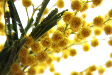 First spring flower №20480