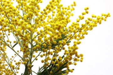 Die erste Frühlingsblume №20506