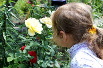 Child smelling flower №20626