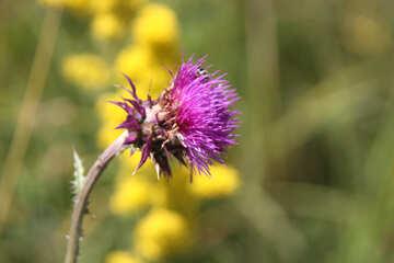 Medical herb №20336
