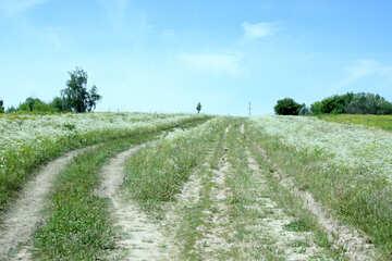 Dirt road №20225