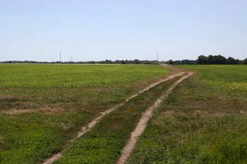 Road in field №20027