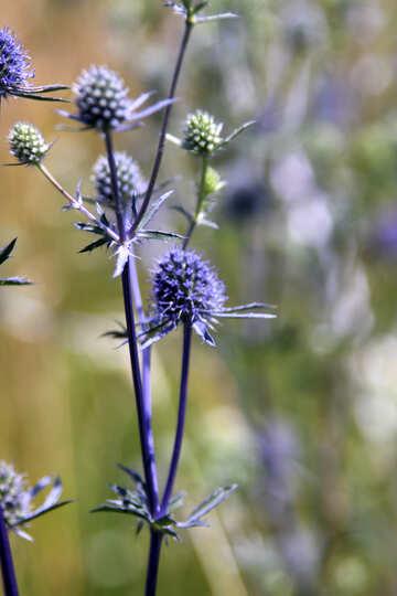 Beautiful blue grass №20348