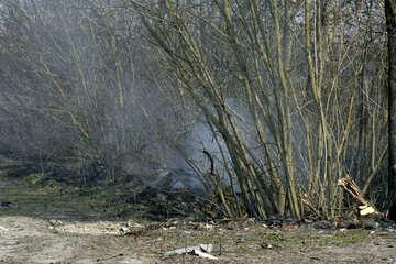 Smoke spring №20409