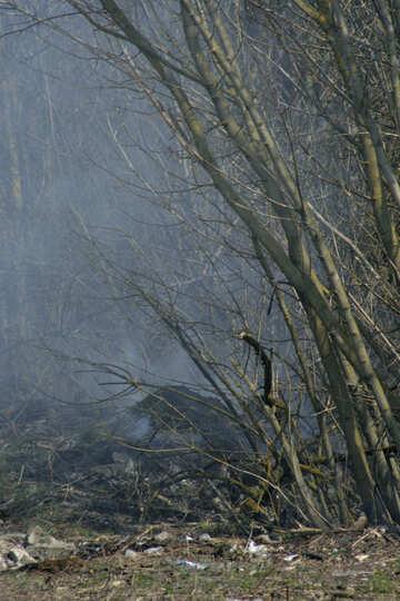 Spring burn trimmed branches №20408
