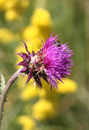 Flor silvestre №20338