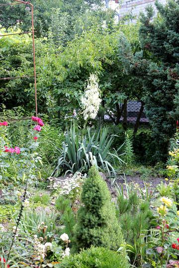 Blooming Garden №20653