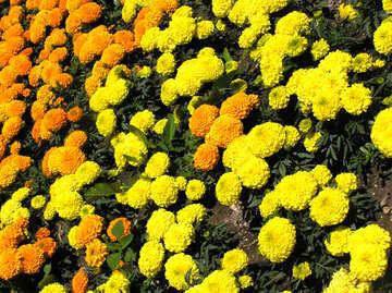 Flauschige gelbe Blumen №20697