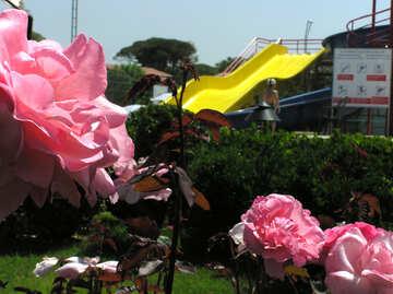 Blumen vor Ort №20714