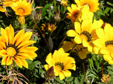 Gelbe Blumen №20857