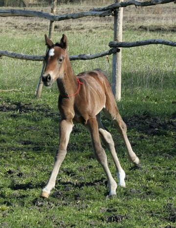 Foal on walk №20431