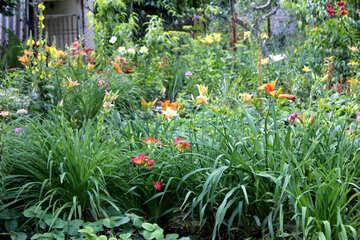 Viele Blumen im Garten №20570