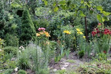 Fiori nel giardino №20652