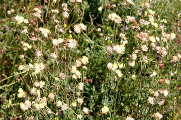 Wildflowers №20331