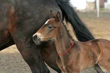 Foal №20433
