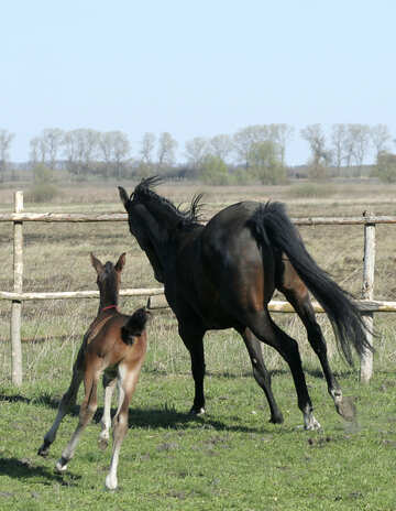 Mom plays with her foal №20422