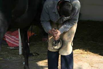 Cleaning the horse`s hooves №20449