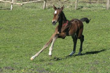 The foal runs №20425