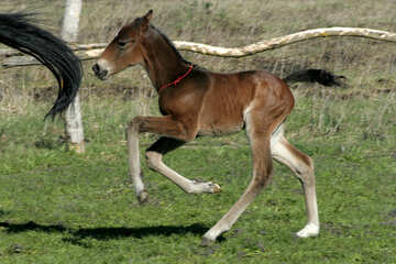 The foal runs after her mother №20427