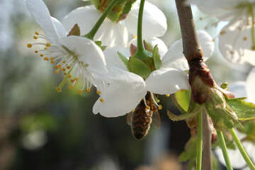 Bee hiding in the flower №20513