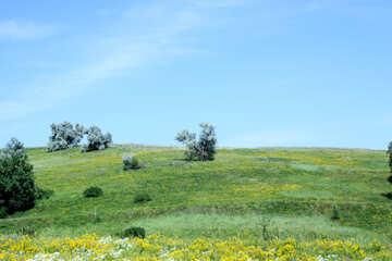 Blooming slope №20226