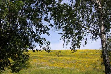 Blooming slope №20267