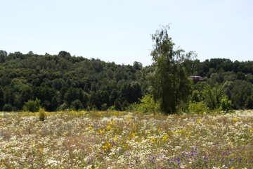 Nature in Ukraine
