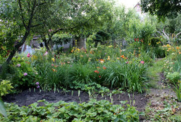 Flower bed at the cottage №20573