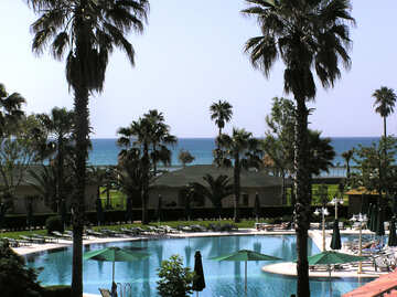 Pool under the palm trees №20783