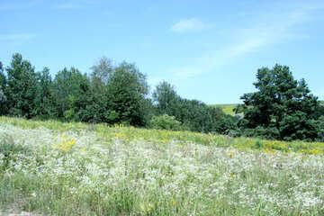 Overgrown slopes №20222