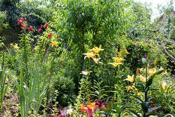 Dickicht der Lilien №20606